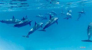 voyage-initiatique-yoga-Dauphins6